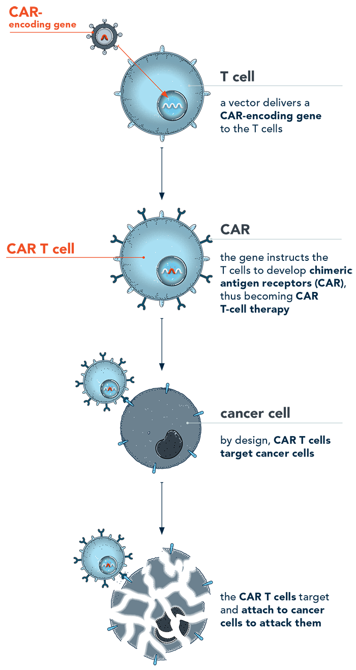 Image of CAR T-cell therapy